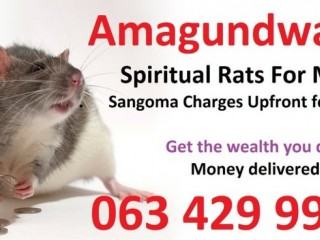 I need a real Money spells with spiritual rats in south Africa +27634299958 spain Italy usa uk UAE Kuwait Egypt Turkey